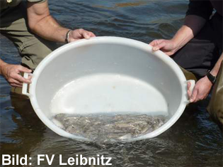 fv-leibnitz_aeschenbesatz_p1020768_ausschnitt2_80dpi_10.5x7.45cm_schrift