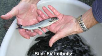 fv_leibnitz_aeschenbesatz_schrift